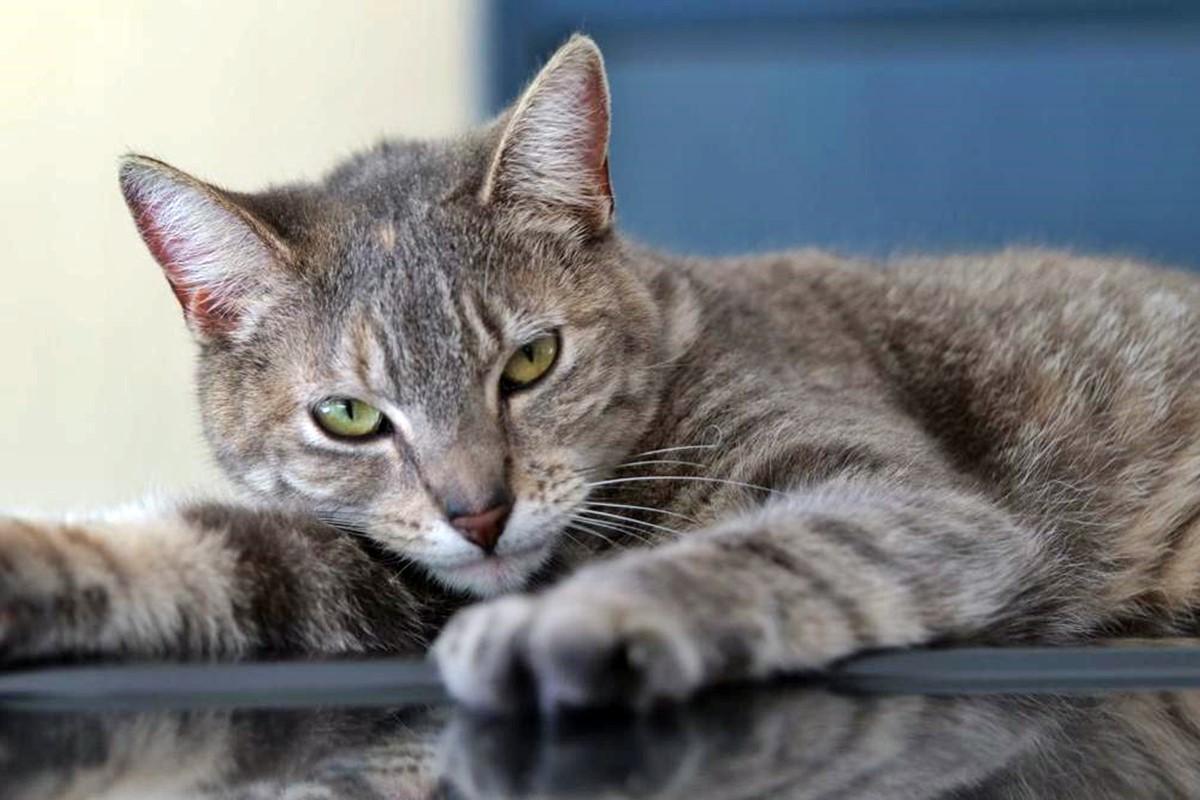 Gatto magro e triste