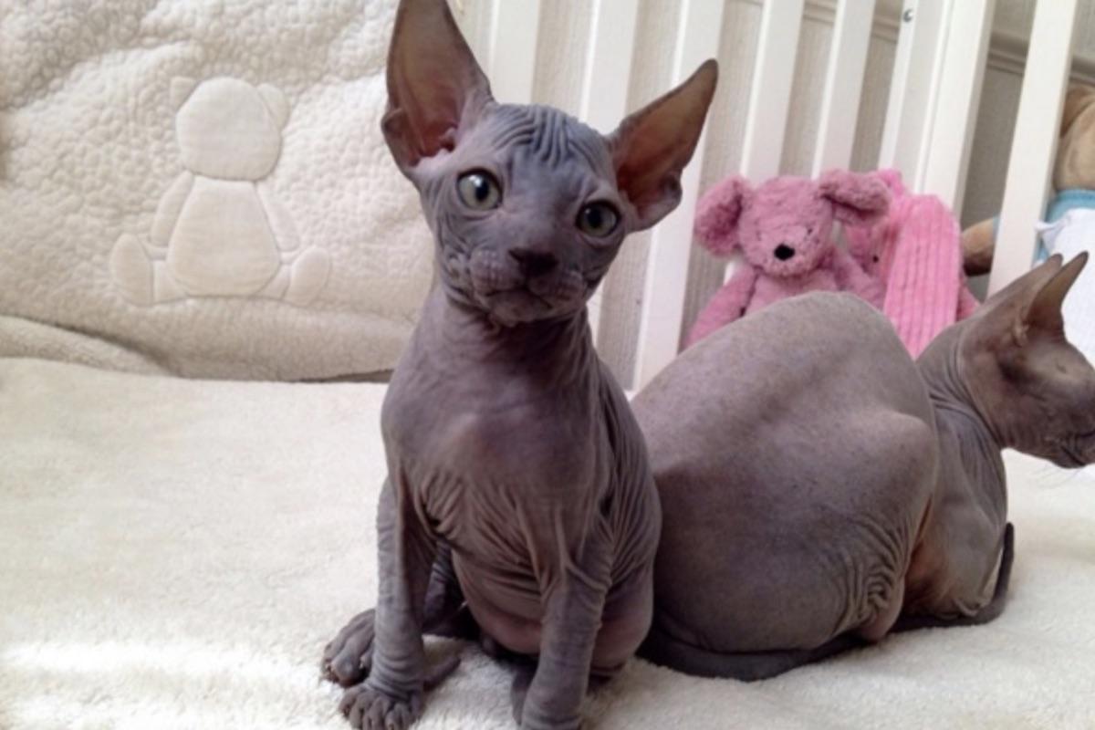 Gattino magro