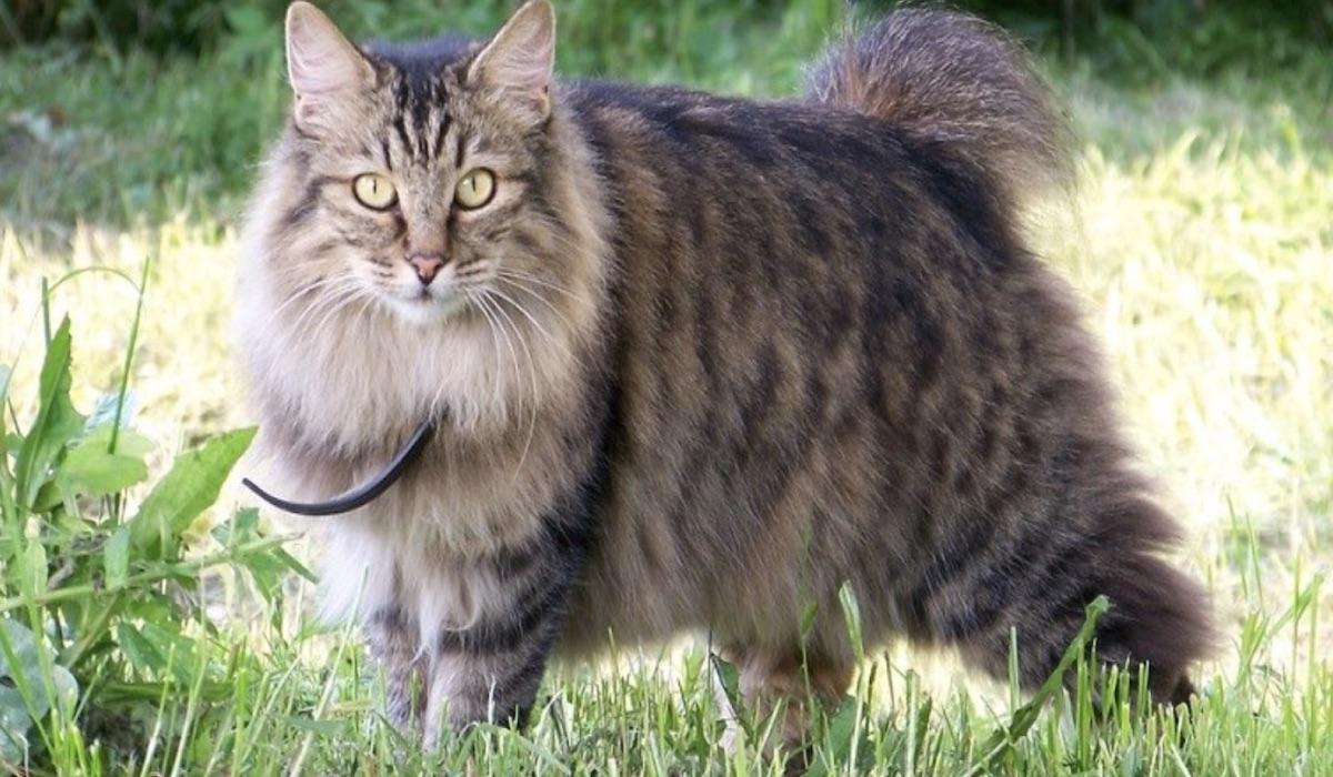 gatto grassoccio