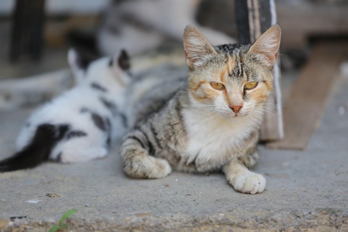 mamma gatta che allatta un gattino
