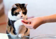 snack per gatti