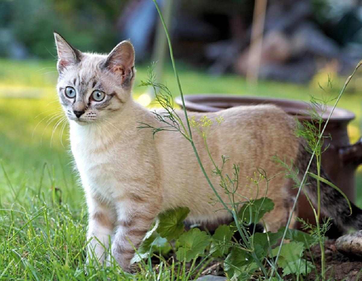 gatti punto studio scientifico michigan