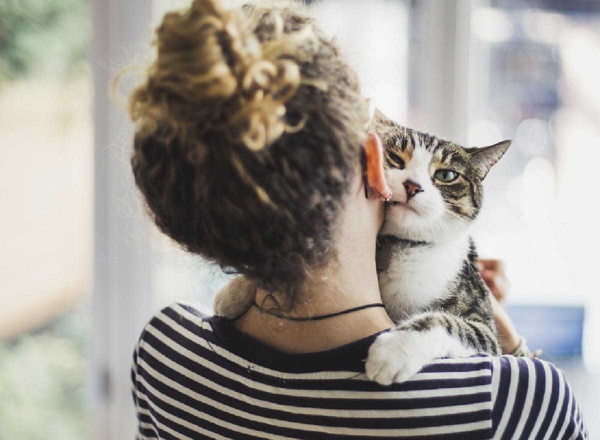 gatti comprensione essere umano