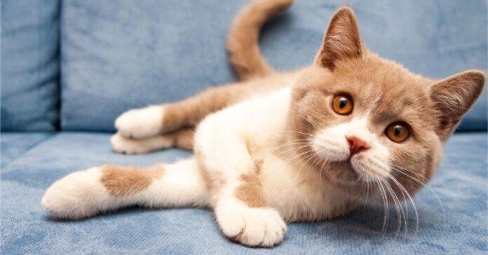 svelato cosa provano davvero i gatti quando loro padroni cambiano umore