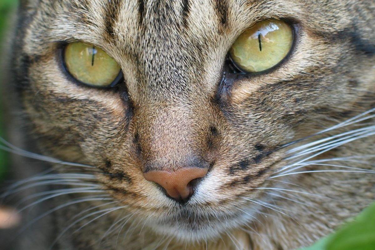 curare occhi dei gattini