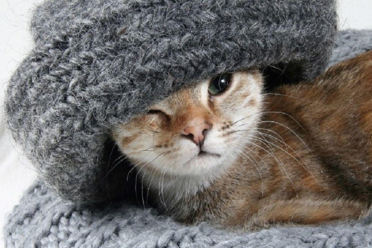 come curare il raffreddore ai gattini