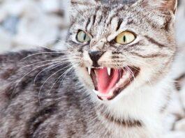 gattini a che età soffiano