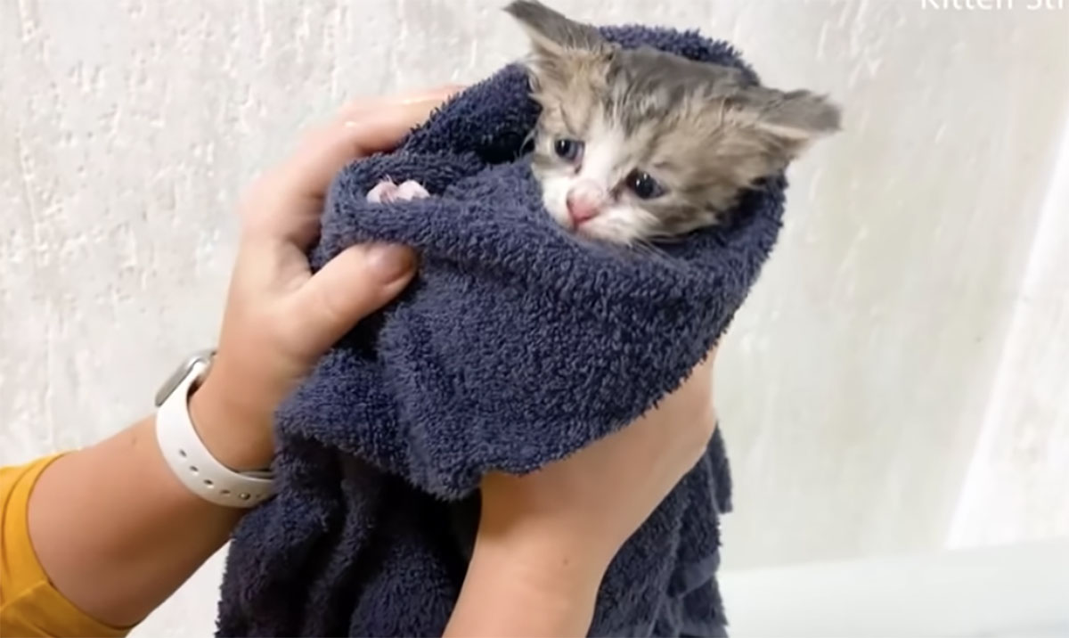gattino avvolto nell'asciugamano