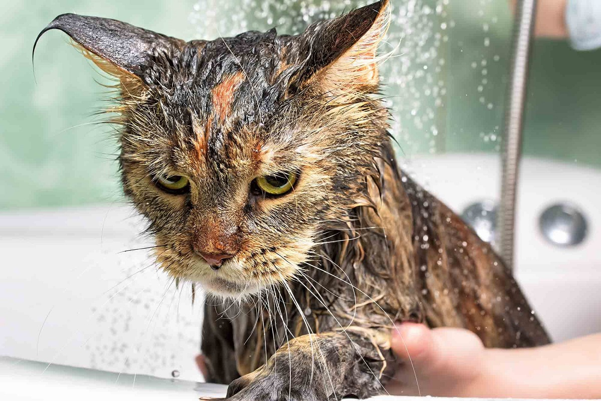 gatto nella vasca da bagno