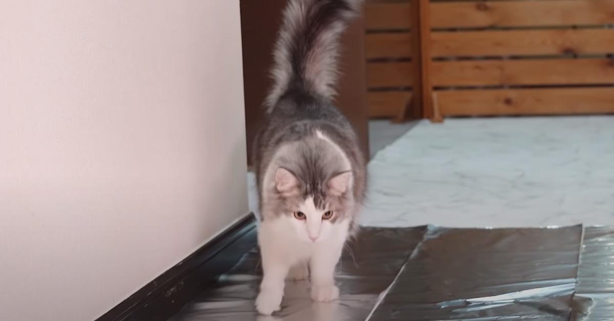 Gatto che cammina sulla stagnola
