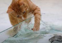 Gattino gioca con l'acqua