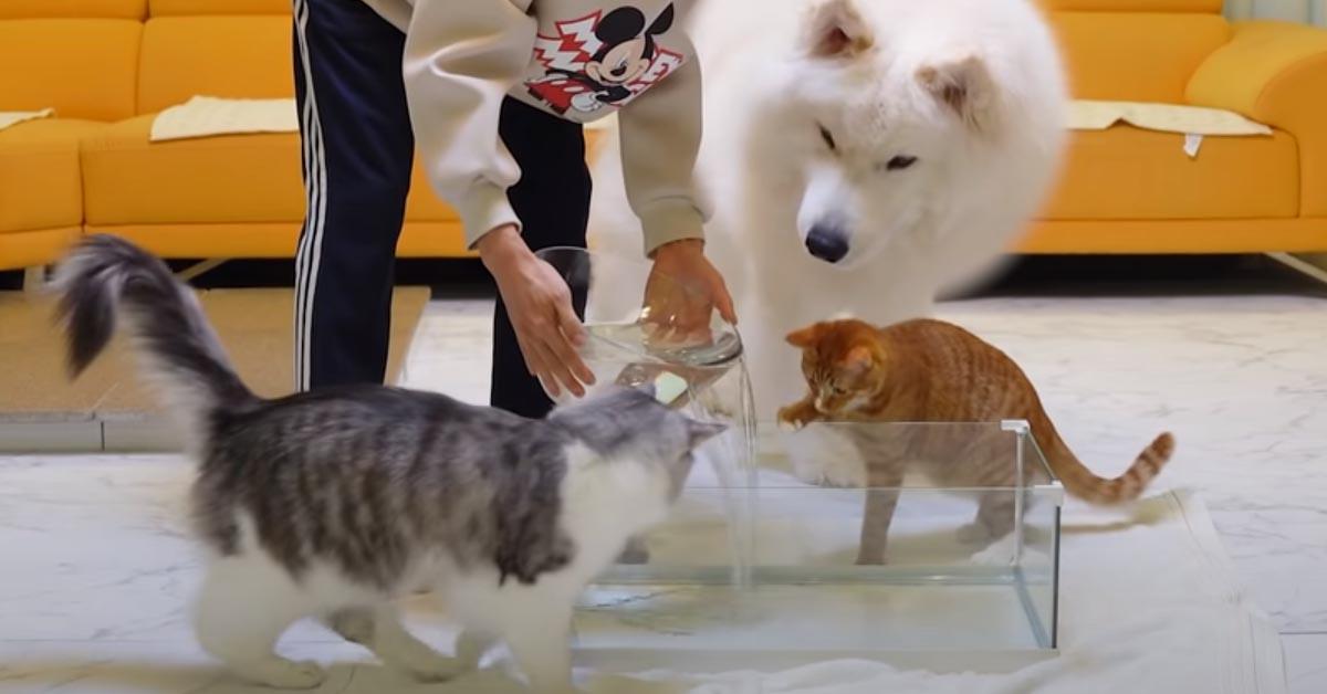 Due gattini con un Samoiedo