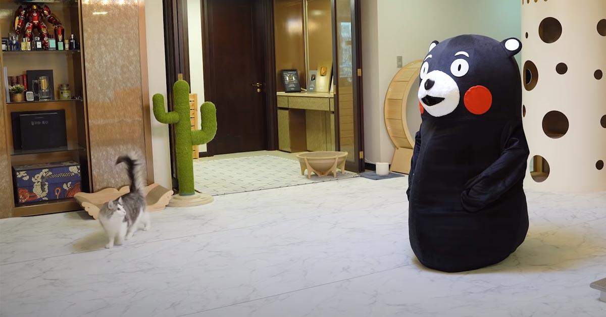 Gatto di fronte ad un peluche gigante