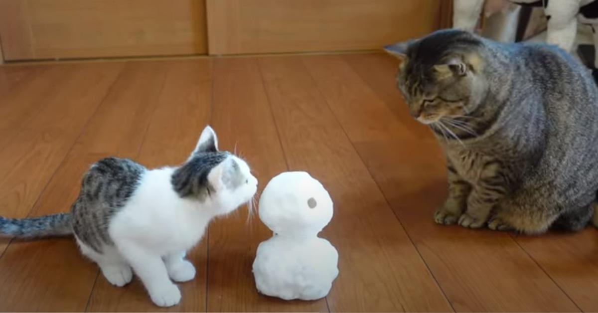 Gatti che osservano un pupazzo di neve