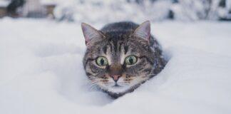 gattini giocano con la neve