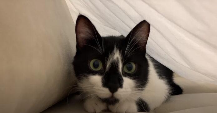 Gatto sotto le lenzuola