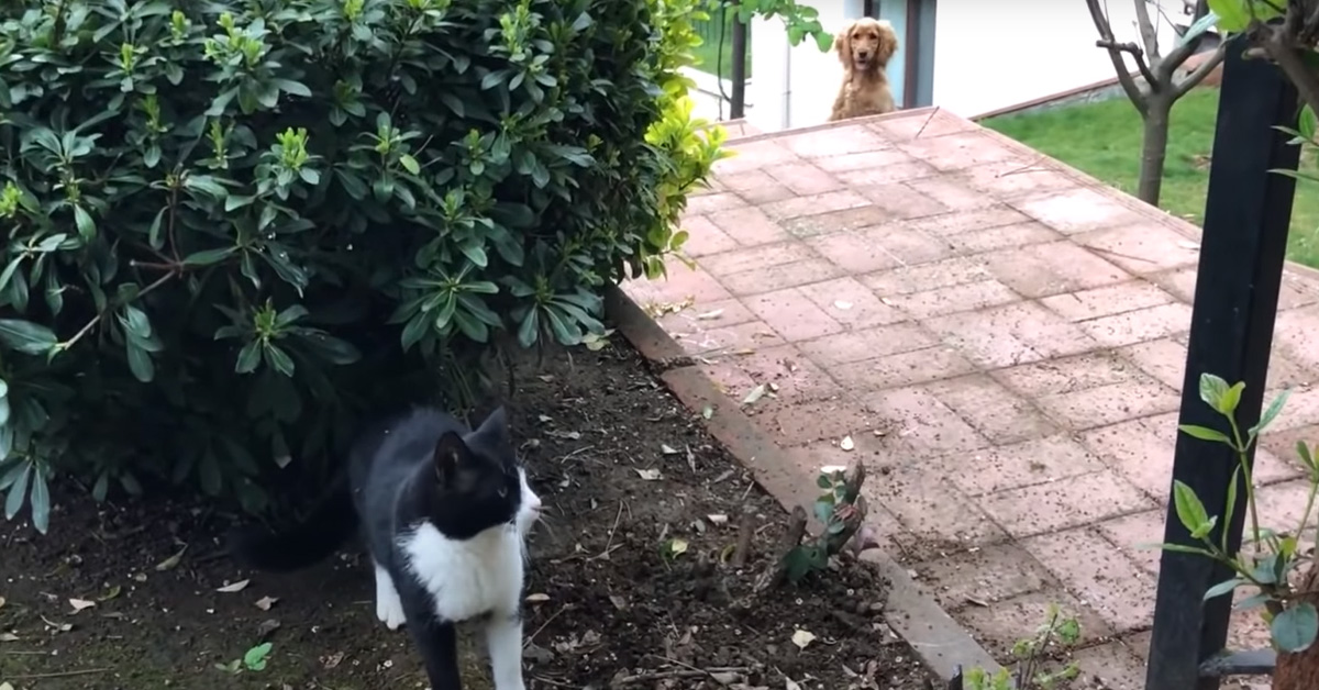 Gatto con un Cocker