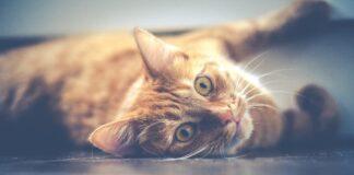 gattini scoprono il metro per la prima volta