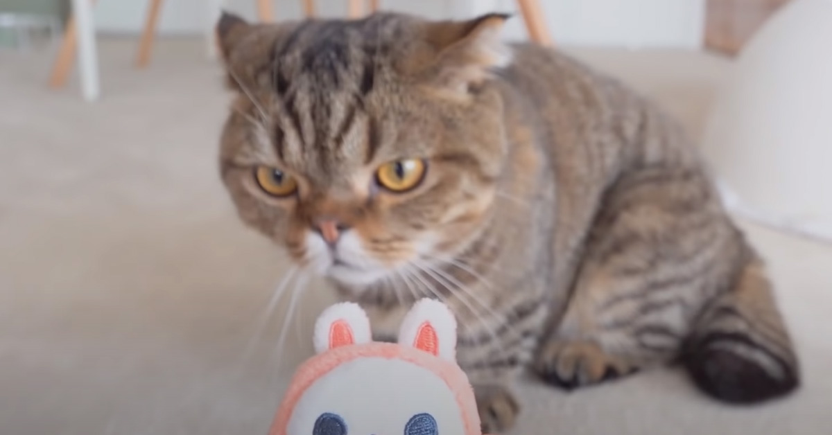 Gatto osserva un portachiavi