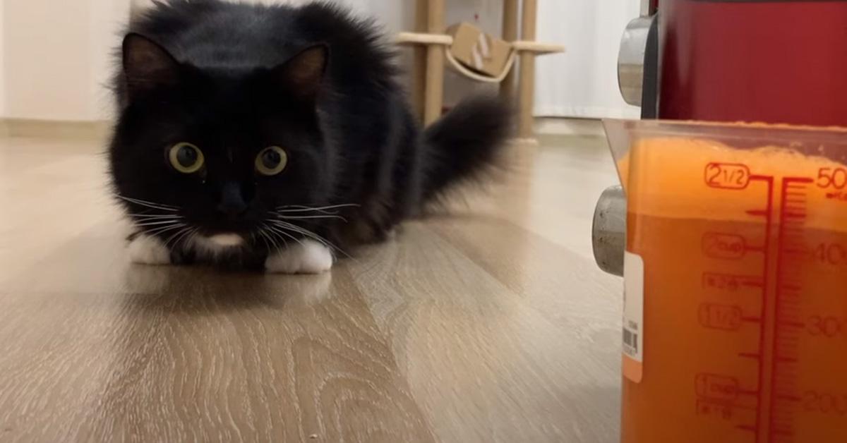 Gatto che osserva un frullatore