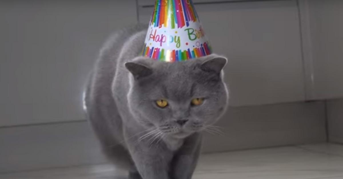 Gatto festeggia il compleanno