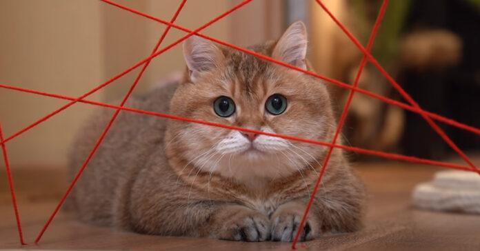 Gatto affronta una sfida