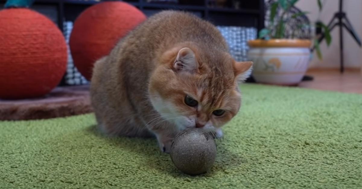 Gatto che gioca con una pallina