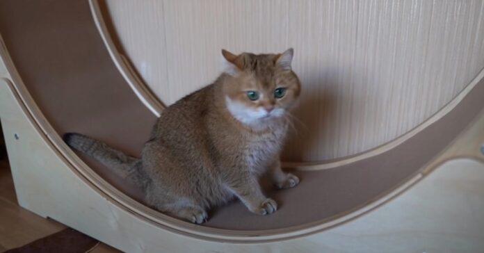 Gattino su una ruota