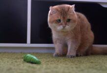 Gatto che gioca con un bruco giocattolo