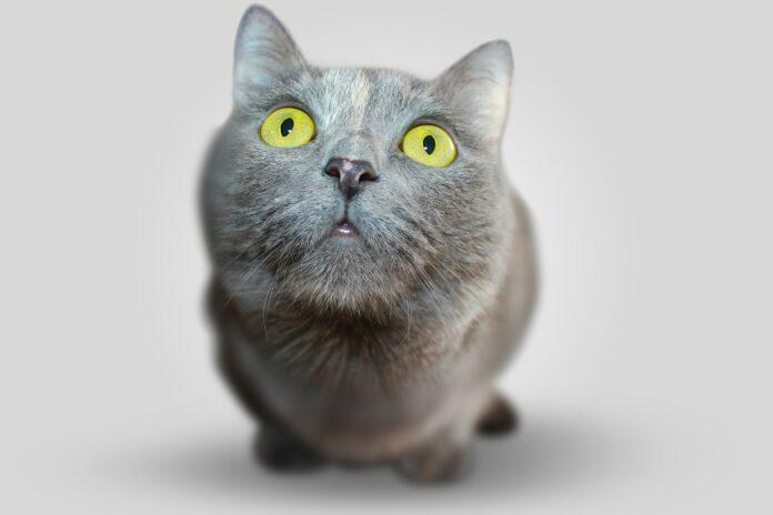gattino Kafka vede per la prima volta un tapis roulant