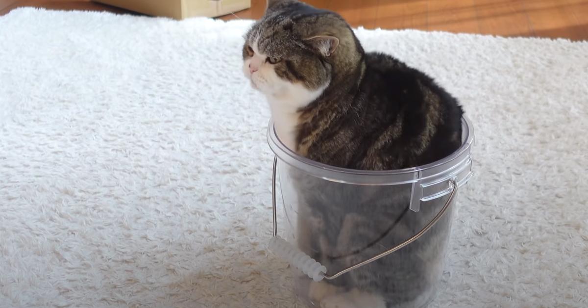 Gattino dentro ad un barattolo