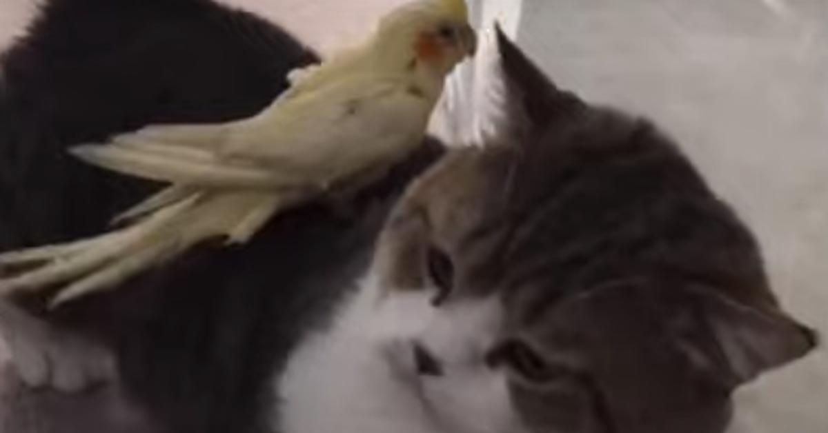 Gatto con un pappagallo