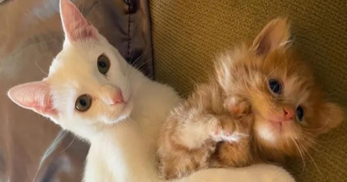 Pua gattino amico video
