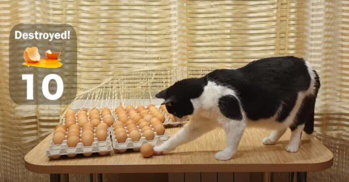 Gattino di fronte a molte uova