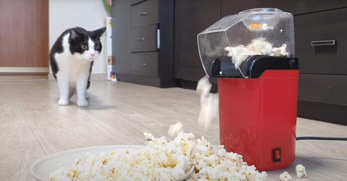 Gatto osserva macchinetta dei popcorn