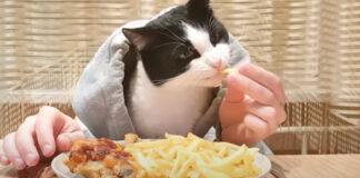 Gatto al ristorante
