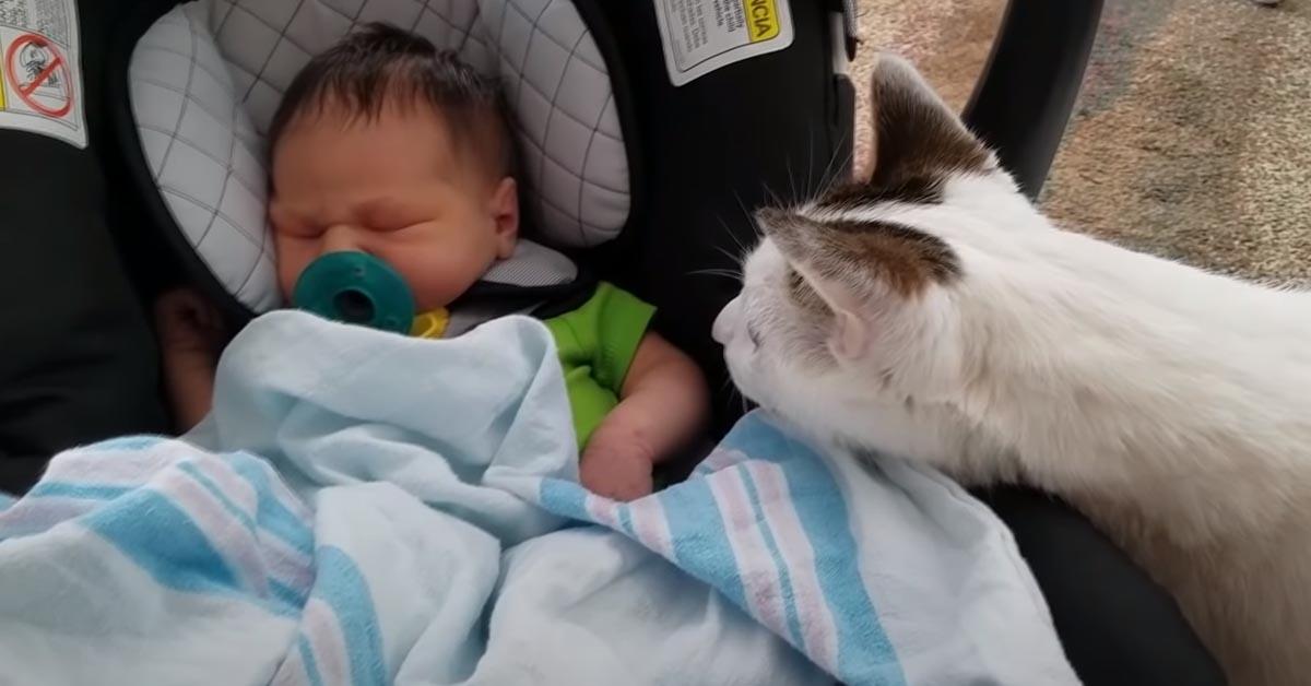 Gattino con un bambino