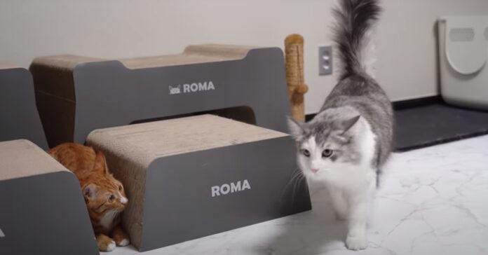 Gatti giocano a nascondino