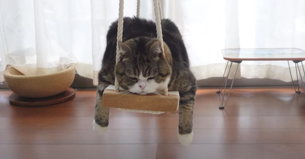 Gatto su un'altalena