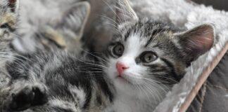gattino che non sa mangiare e combina tanti guai