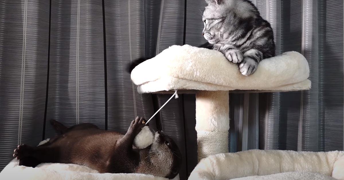 Gatto con una lontra
