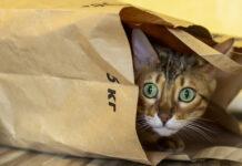 Gatto dentro ad una busta