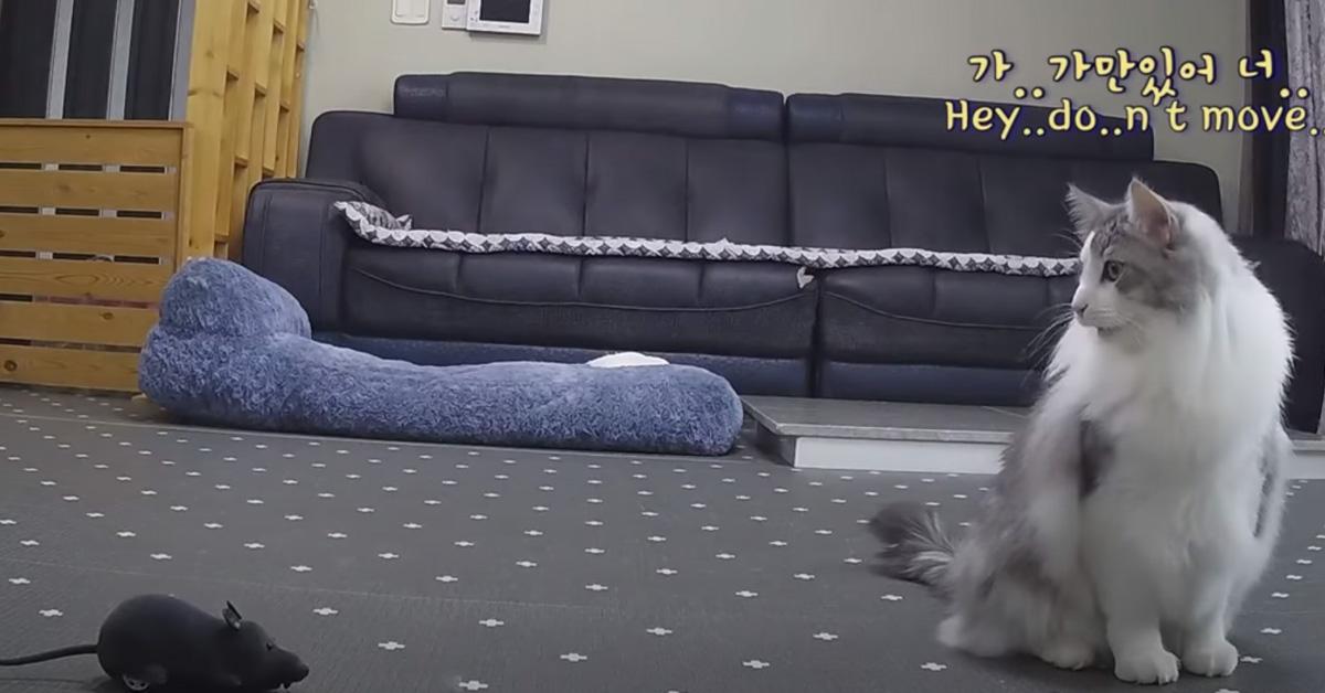 Gatto gioca con un topo finto