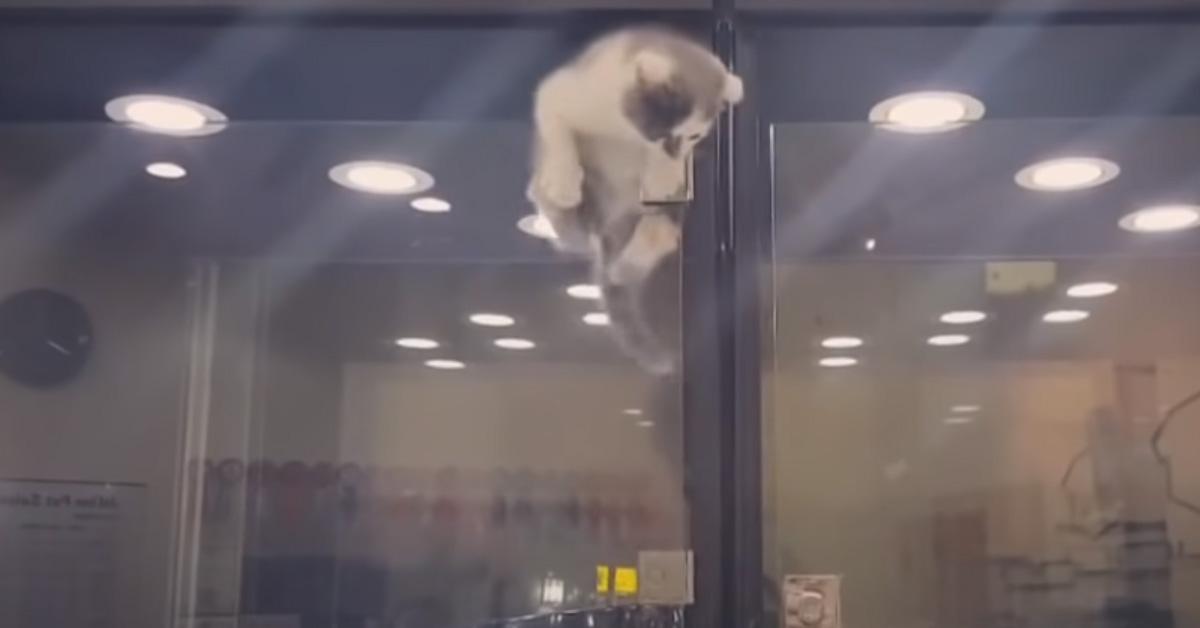 Gatto che scappa