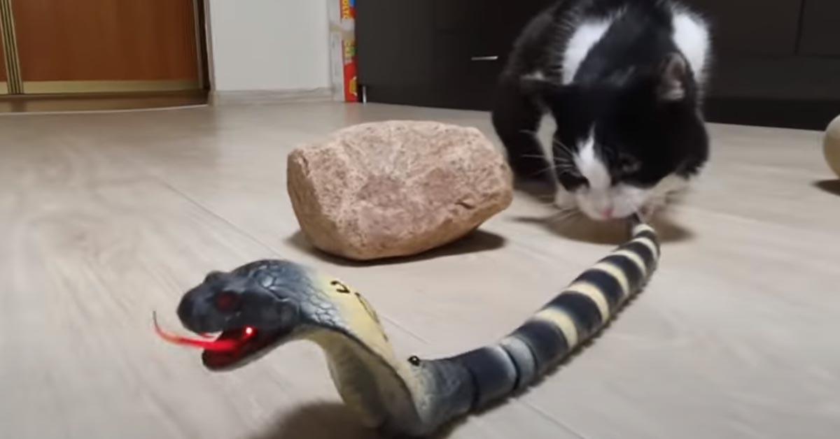 Gattino gioca con un serpente finto