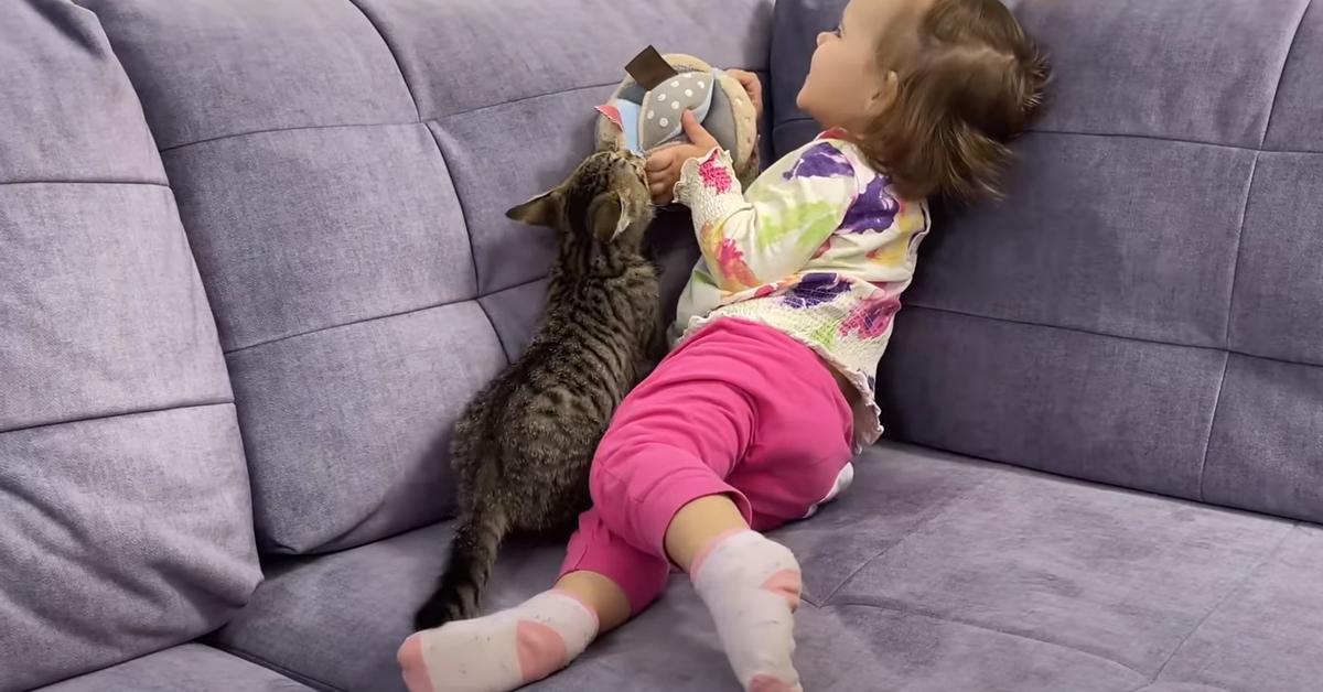 Gatto gioca con una bambina