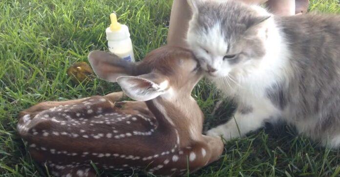 Gattino con un cerbiatto