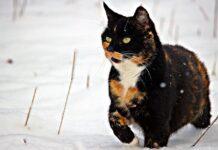 Gatto nella neve
