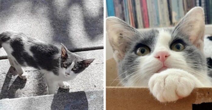 gattina Pistacchio vita video