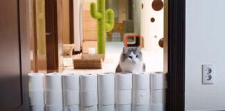 Gatto contro muro di rotoli di carta igienica